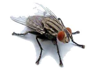 отпугиватель насекомых ультразвуковой отзывы комары